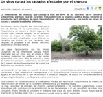Chestnut trees affected by cancer will be treated with a virus